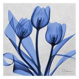 Midnight tulips 2 Posters by Albert Koetsier
