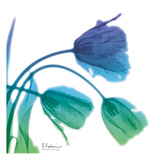 Tulips L83 Turq Blue Poster by Albert Koetsier