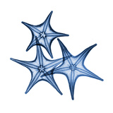 Blue Three Starfish Prints by Albert Koetsier