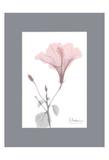 Hibiscus B49 Pink Matte Prints by Albert Koetsier