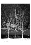 Central Park Three Amigos Winter Prints by Jeff Pica