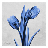Midnight Tulips Prints by Albert Koetsier