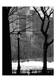 Central Park Concrete Forest Prints by Jeff Pica