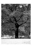 Central Park Solitary Friend Prints by Jeff Pica