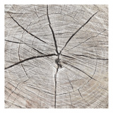 Tree Rings Prints by Jace Grey
