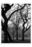 Central Park Dancing Trees Print by Jeff Pica