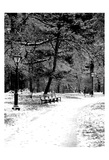Central Park Snowy Scene 2 Art by Jeff Pica