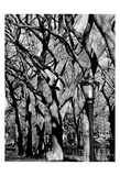 Central Park Image 1744 Posters by Jeff Pica