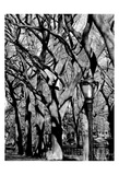 Central Park Forest Posters by Jeff Pica