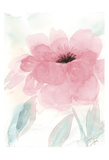 Blush Peony I Prints by Beverly Dyer