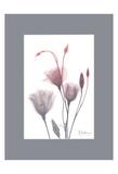 GentianB9 Pink Matte Prints by Albert Koetsier
