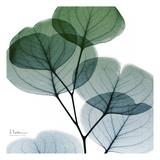 Dull Eucalyptus Mate Print by Albert Koetsier