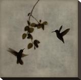 Dance in Flight II Reproduction sur toile tendue par Chris Donovan
