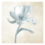 Blue Ivory Blossom 1 Prints by Dianne Poinski
