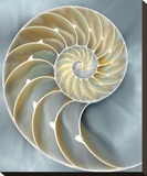 Nautilus in Blue I Stretched Canvas Print by Caroline Kelly
