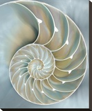Nautilus in Blue II Stretched Canvas Print by Caroline Kelly