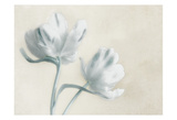 Blue Ivory Blossom 2 Prints by Dianne Poinski