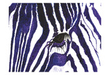 Blue Zebra Prints by Simona Altavilla