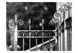 Fence 3 Prints by Tracey Telik