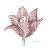 Romantic Tulip 1 Art by Lorraine Rossi
