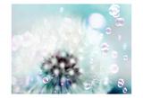 Teal Dandelion Posters by Tracey Telik
