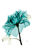 Teal Spirit Rose 2 Print by Albert Koetsier