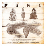 Pine Poster by Jace Grey
