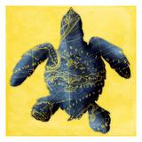 Map Turtle Y Indigo Poster van Jace Grey