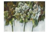 Hydrangea Twilight Prints by Rian Withaar