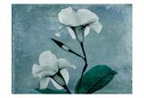 Iceland Mandelilla Prints by Albert Koetsier