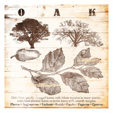 Oak Prints by Jace Grey