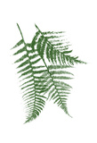 Green Ferns Mate Posters by Jace Grey