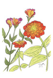 Zinnia Prints by Beverly Dyer