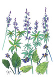 Wild Lupine Prints by Beverly Dyer
