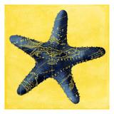 Map Starfish Y Indigo Prints by Jace Grey