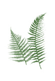 Green Ferns Posters by Jace Grey
