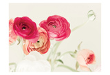 Spring Rannys Prints by Tracey Telik