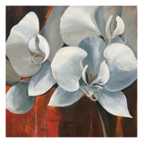 Pearl Orchid I Prints by Rian Withaar