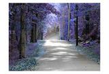 Violet Glow Prints by Sandro De Carvalho