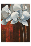 Pearl Orchid I Withaar Posters by Rian Withaar
