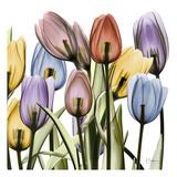 Tulipscape Poster van Albert Koetsier