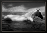 White Horse Swimming Framed Photographic Print by Tim Lynch