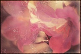 Conceptual Floral Images Photographic Print by Mia Friedrich