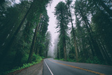 Road through the Redwoods, Del Norte Coast Redwoods, California Photographic Print by Vincent James