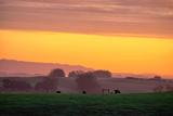Golden Hour, Petaluma Hills, Farm Scene, Sonoma County Photographic Print by Vincent James