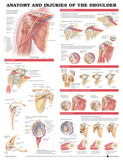 Anatomy And Injuries Of The Shoulder Anatomical Chart Poster Prints