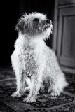 Small Dog Sitting Photographic Print by Tim Kahane