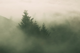 Foggy Green, Trees in Fog at Mount Tam, Bay Area, San Francisco Photographic Print by Vincent James