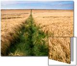 Rural Country Scene in the North of England UK Plakat av Mark Sunderland