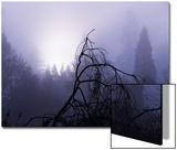 Sharon Wish - Foggy Day with Trees Plakát